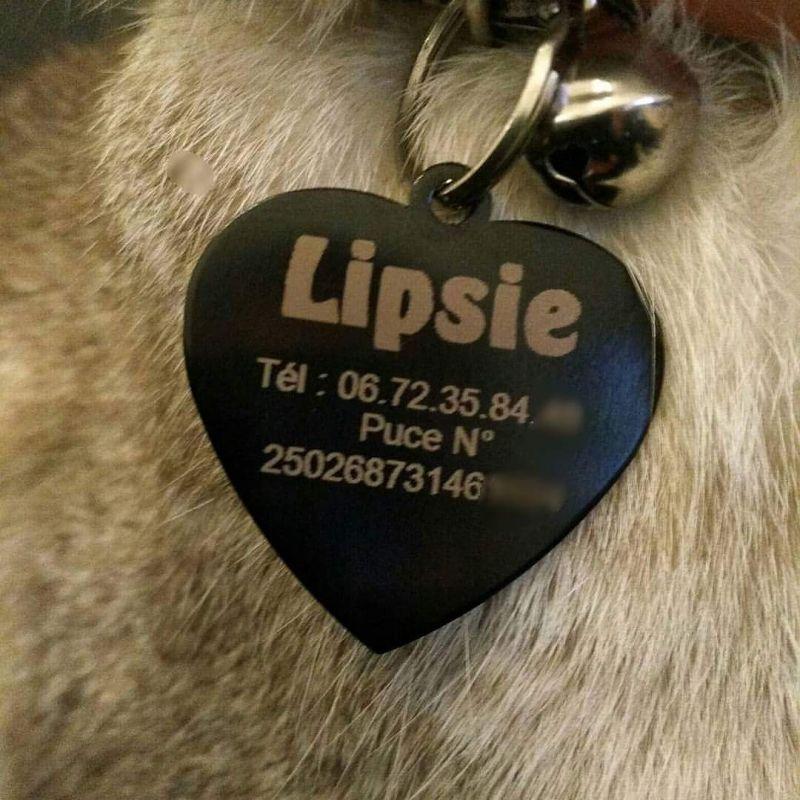 plaque d'identité pour animaux (chien ou chat)
